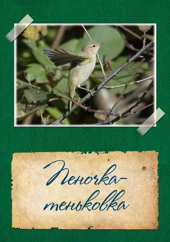 http://lyceum-lomonosov.ru/wp-content/uploads/2015/02/Страница-3.jpg